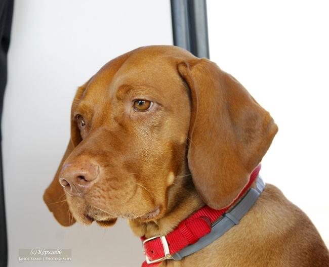 Luca kutya
