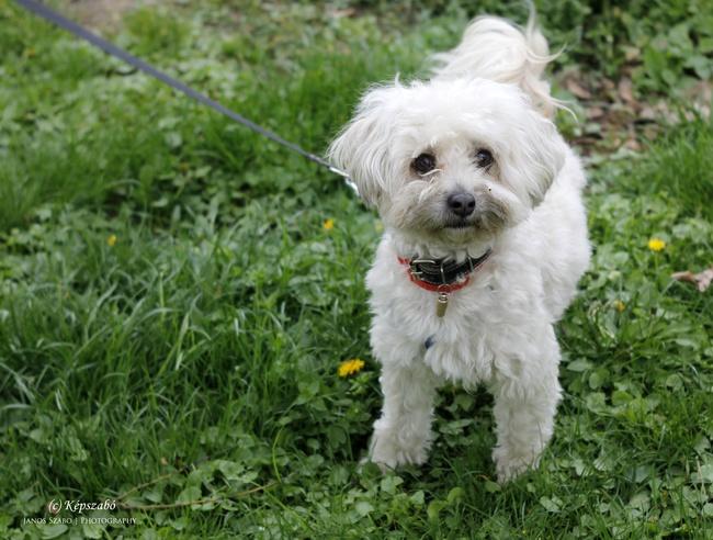 fehér kutyus
