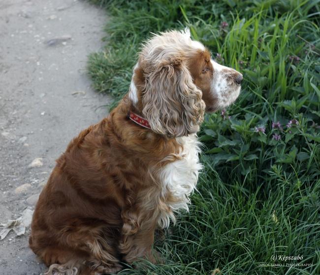 Folti kutya
